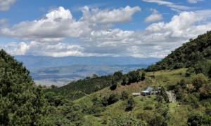Columbian Sugarcane Decaf