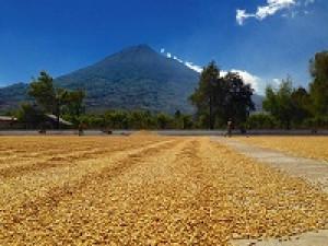 Guatemalan Fair Trade Organic