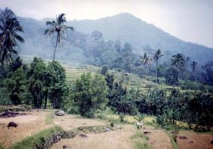 Hyman Smith Coffee Sumatra DP Mandheling