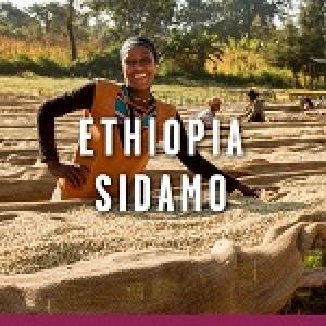 Hyman Smith Coffee Ethiopian Sidamo